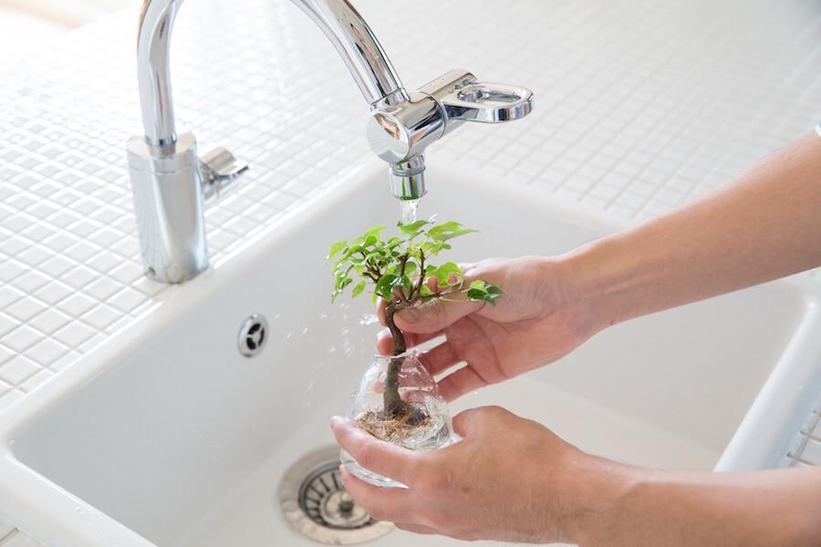 تعویض آب بونسای آکوآ