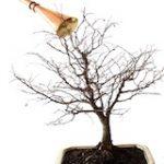 آموزش قدم به قدم تعویض گلدان بن سای